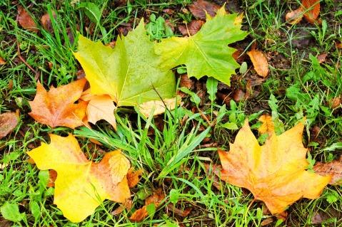 fall-foliage-1701594_1920