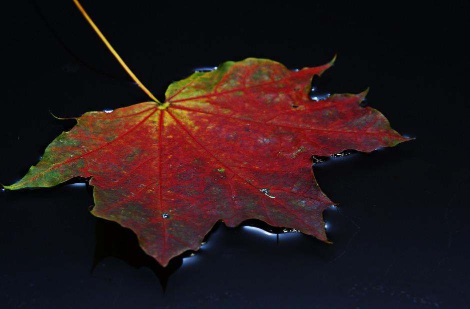leaf-1506602_1920