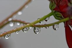raindrop-1643572_1920